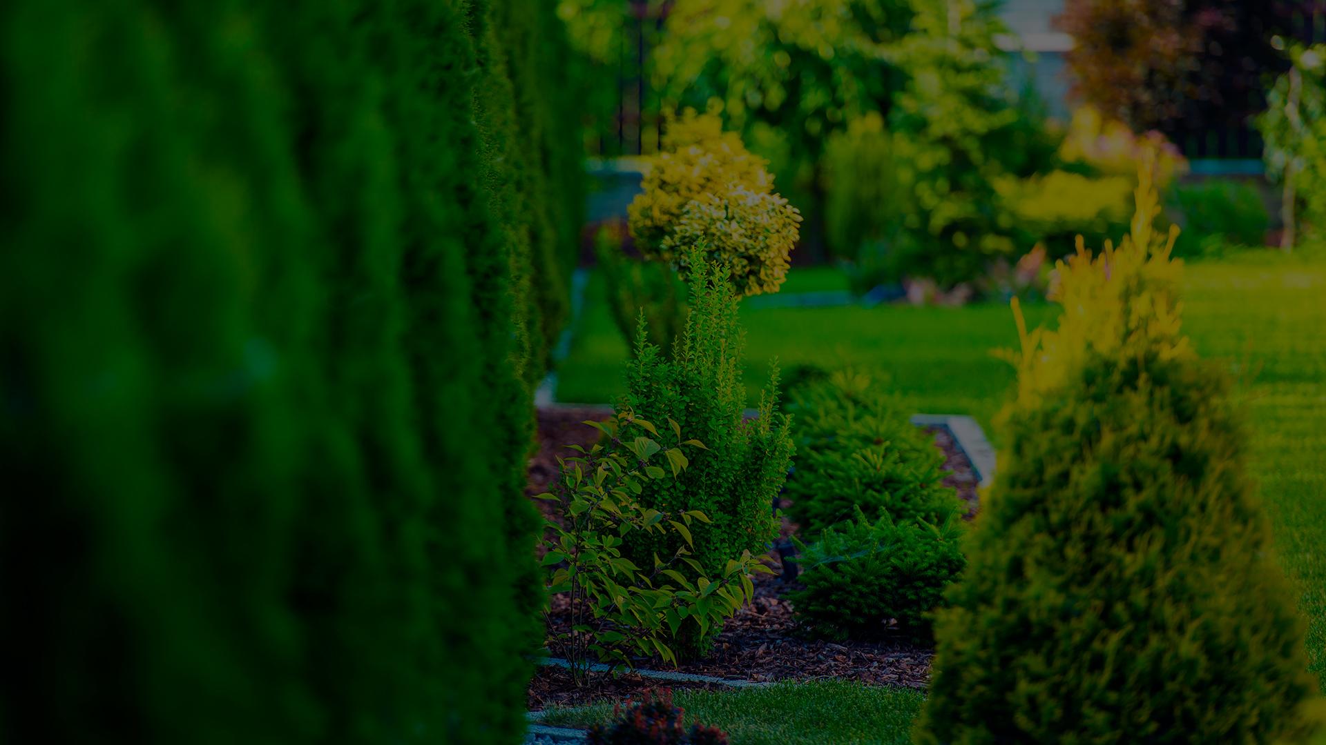 """""""El bienestar de tu jardín nuestro principal objetivo"""""""